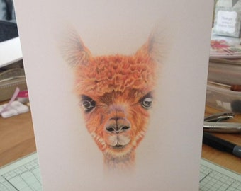 5x7 Alpaca/ Llama blank greeting card, ideal for birthdays, anniversaries, thank you