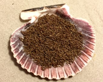 Bloodworms ~ Hermit Crab Food