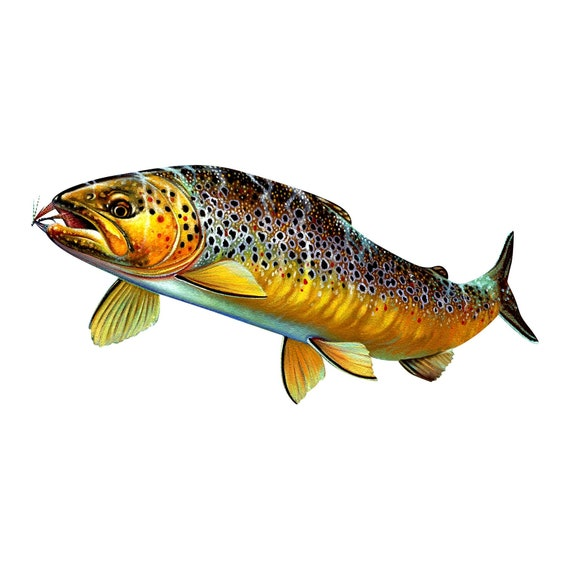 IRELAND Cut-Out Stickers Decals Brown Trout fly fishing UK