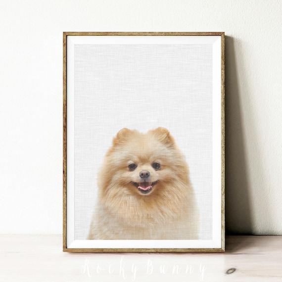 Pomeranian Dog Over White Background Art Print Home Decor Wall Art Poster D