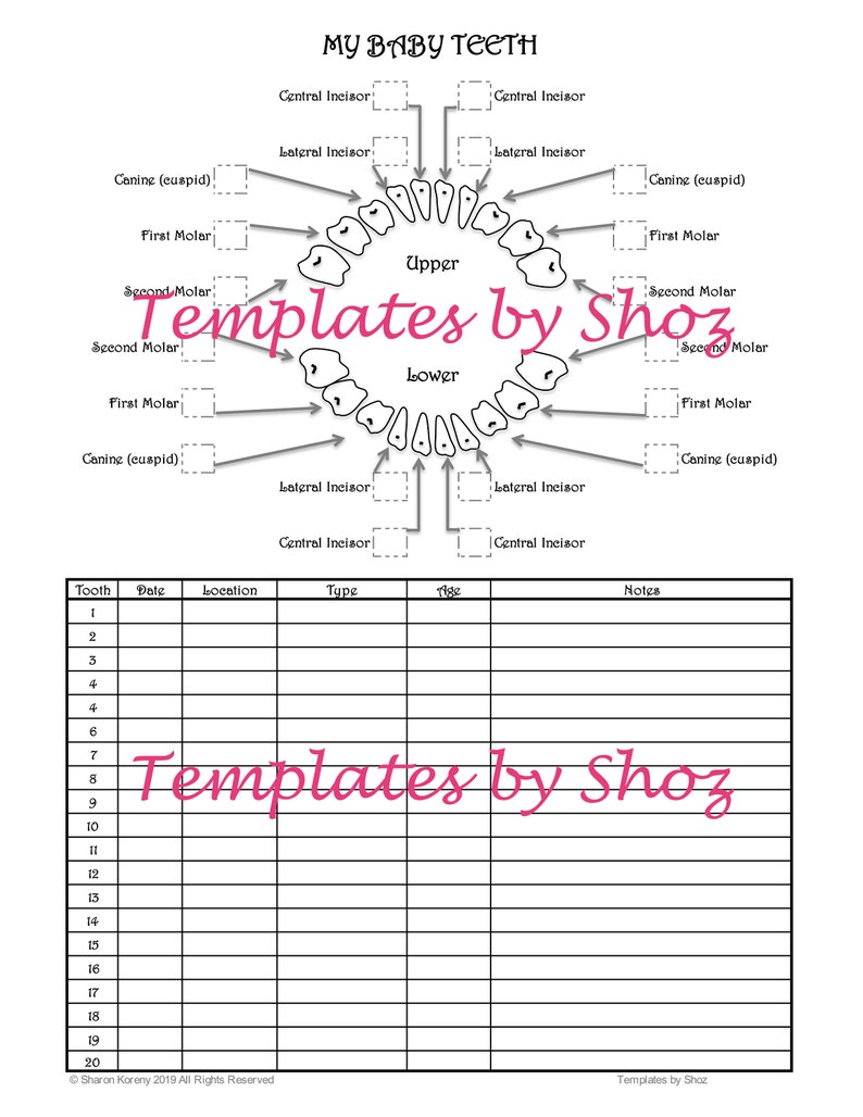 picture relating to Baby Tooth Chart Printable known as Printable Youngster Tooth Chart