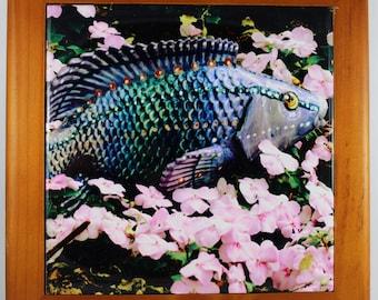 Koi in Pink Flower Stream Original Photography on Porcelain Tile 6X6