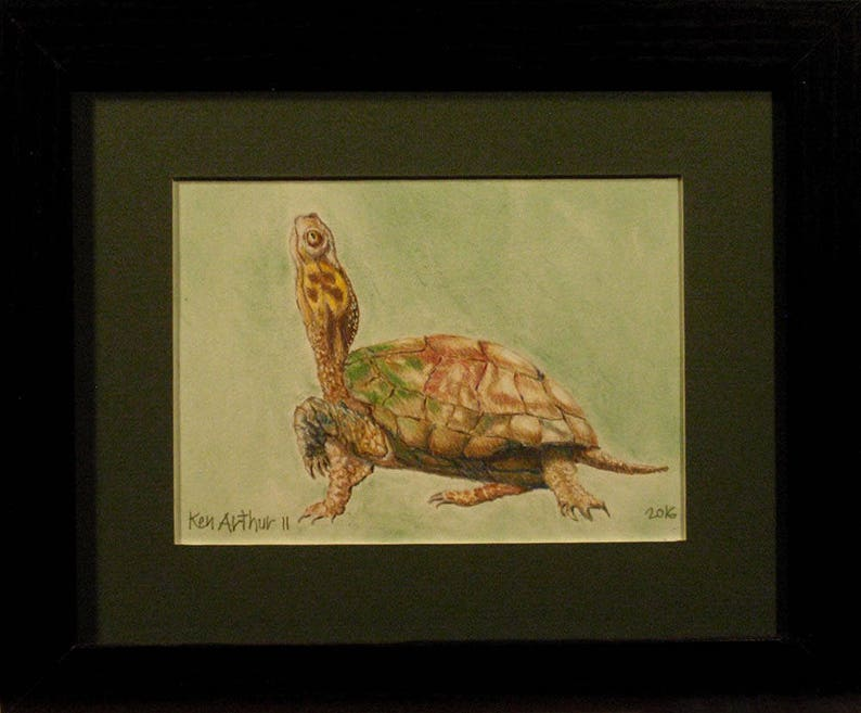 Drawing Turtle Prismacolor Pencil Drawing Nature Wall Art image 0
