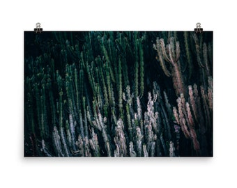 Cactus Forest Poster