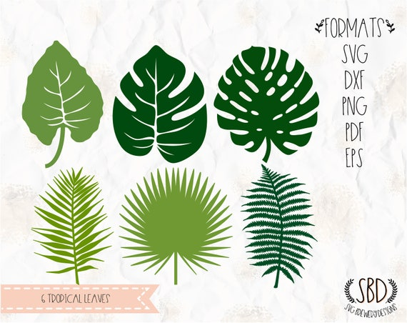 Tropical Plants Leaves Leaf Philodendron Svg Png Eps Etsy