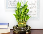 Lucky Bamboo Tiered Tower 3 Elephant Pot- Good Luck Gifts, Indoor Plant Gifts, Feng Shui Gifts, Zen Gifts, Patio Decor, Bamboo Arrangement