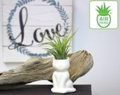 Air Head Family quot Cat quot Complete Kit - White Ceramic Pot Air Plant Holder With Live Tillandsia Air Plant