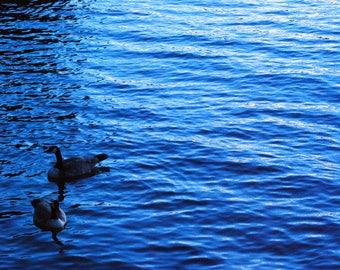 Ducks in Water, Photo