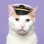 Pet Costume - Marine Captain Mini Hat - Cat Captain Hat - Pet Photo Prop - Mini Hat