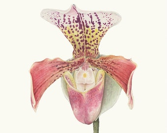 A3 Tropical Orchid Print