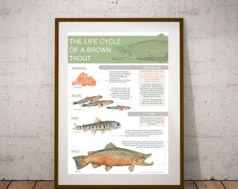 Information Poster on the Brown Trout
