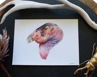 California Condor Print