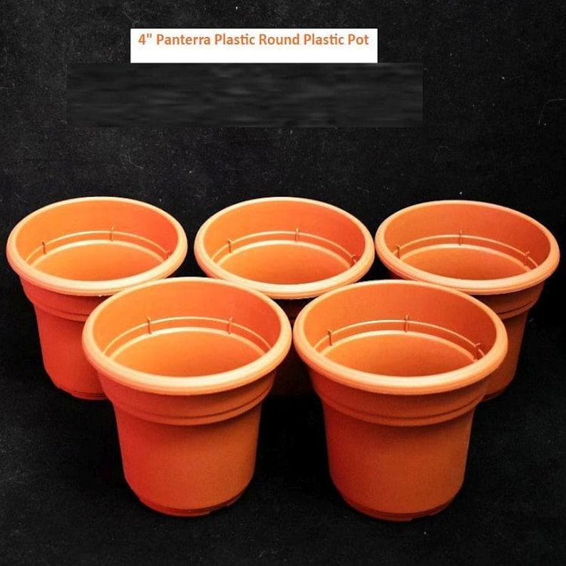 4426209 4/'/' Panterra Plastic Orchid Pot 10 Pack