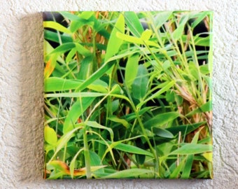 Grasses Canvas