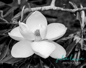 Perseverance - Magnolia, Wall Art, Art Photography, Nature, Black and White, Flower Photo, Macro, Home Decor