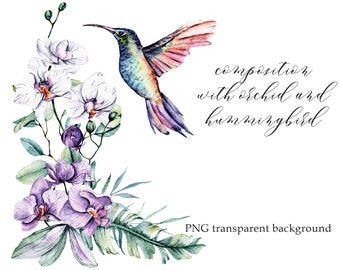 Watercolor hummingbird and flowers orchid, colibri clipart, PNG transparent background, tropical aquarelle clipart, Free Commercial Use