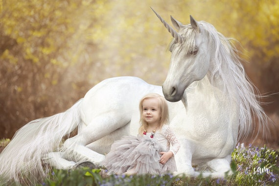 Unicorn In A Field Of Bluebells Unicorn Background Unicorn Etsy