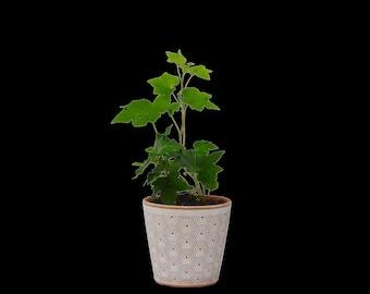 Affordable Healthy Houseplants Succulents Air by houseplantshop