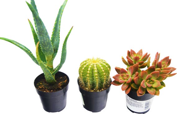 Aloe Vera Succulent And Cactus Variety 3 Pack All Different Etsy