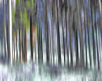 "Abstract photography ""Magic forest"""