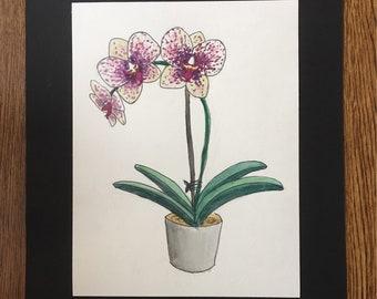 "Original Watercolor painting, Orchid Watercolor painting, Small and Simple Watercolor Painting, 8.5"" x 10.5"""