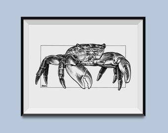 "Striped Shore Crab 8"" x 10"" Print"