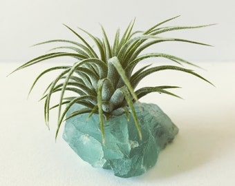 """Fluorite """"Serenity"""" Crystal with Live Air Plant, Calming Meditation Room Decor, Gift for Crystal Lovers, Turquoise Gemstone Air Plant Holder"""