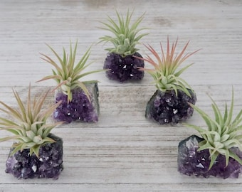 """Amethyst """"Intuition"""" Crystal with Live Air Plant Tillandsia, Amethyst Gift, Air Plant Crystal Gift, Air Plant Holder, Crystal Air Planter"""