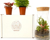Gift Idea Terrarium Kit with Cork Lid Optional Fittonia Carpet Moss Home Office Decor