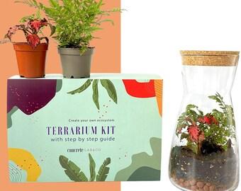 Gift Idea Terrarium Kit with Cork Lid & Optional Fittonia Carpet Moss Home Office Decor