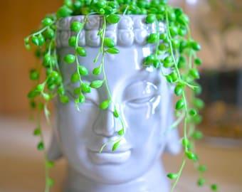 Buddha Head Planter Ceramic Pot Garden Indoor Outdoor Home Decor Flower Zen Garden