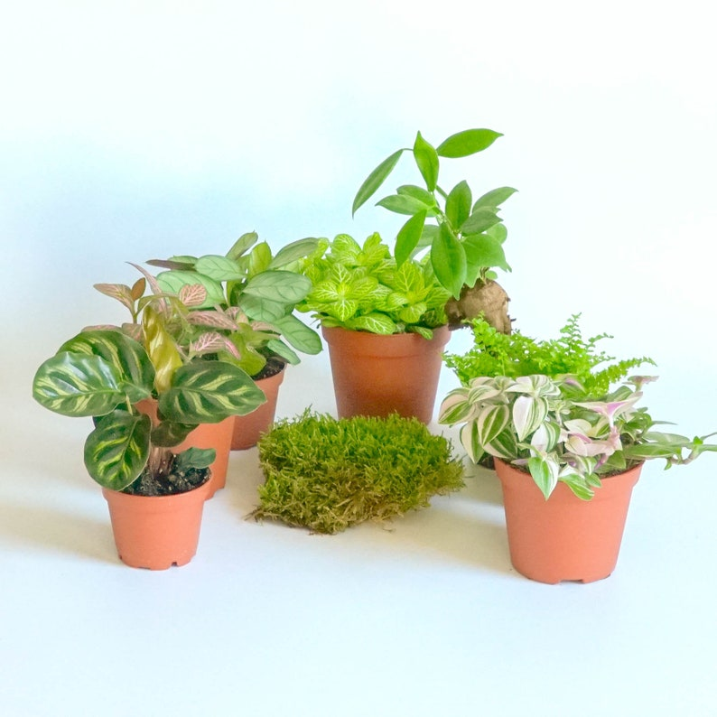 Terrarium Plants For Both Open And Closed Etsy