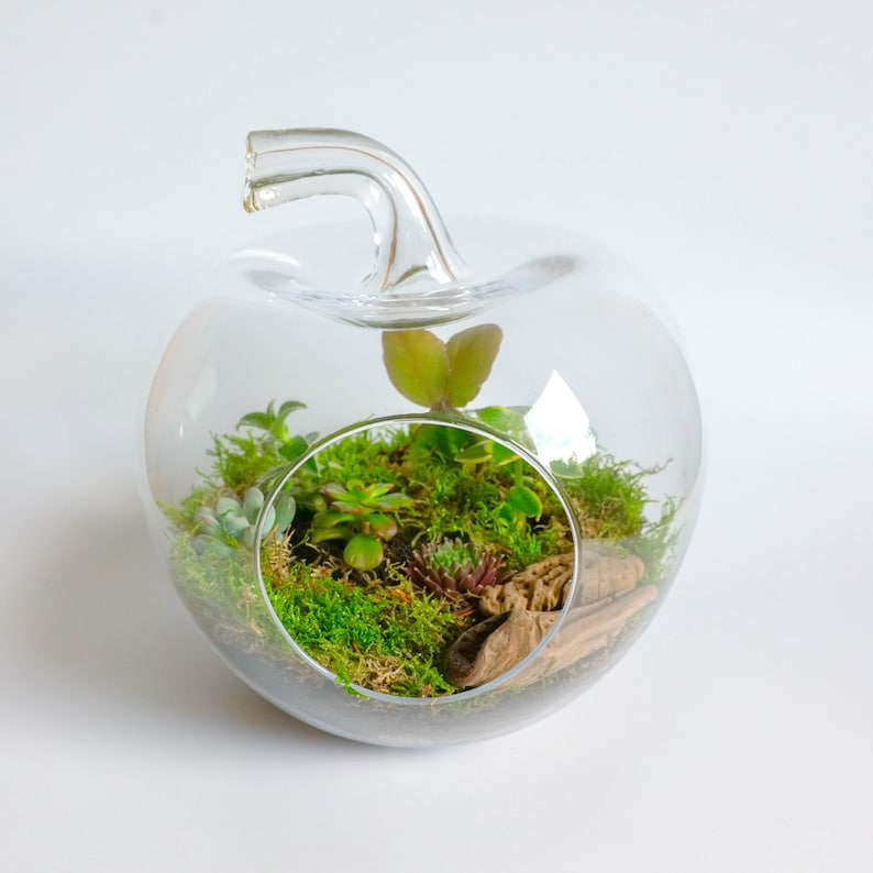 Apple Shaped Grow Your Own Glass Terrarium Diy Kit Home Decor Etsy
