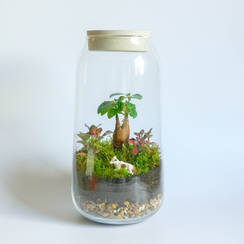 Terrarium Kit With Tall Handmade Glass Concrete Lid Etsy