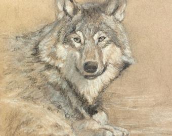 Wolf Sketch (Daily Study): Original Sketch