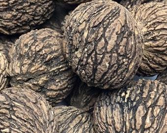 1lb Black Walnuts, Fresh Black Walnuts, Walnuts In Shell, Organic Walnuts