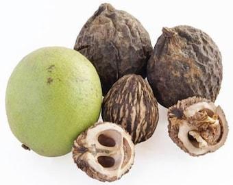 50 Black Walnuts In Shell, Fresh Walnuts
