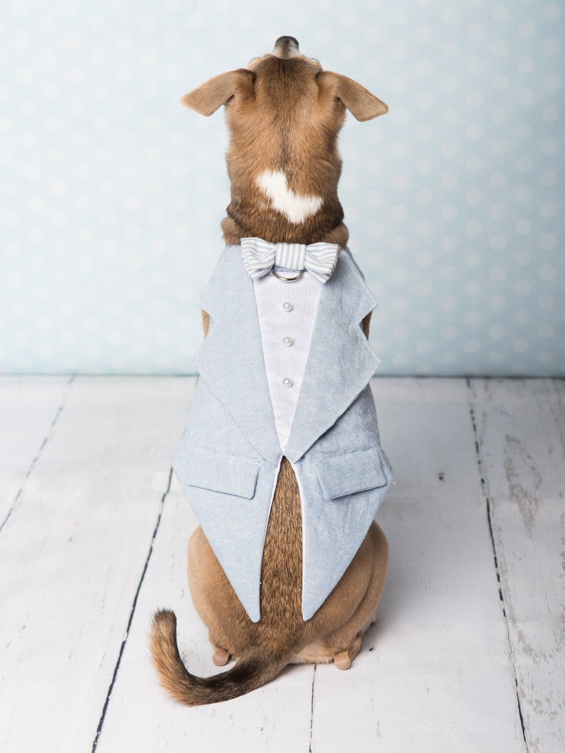 Pale blue and white tuxedo for dog for wedding anniversary image 0