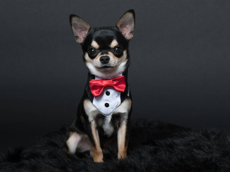 bow tie bandana for dog 8 inches to 28 inches for wedding image 0