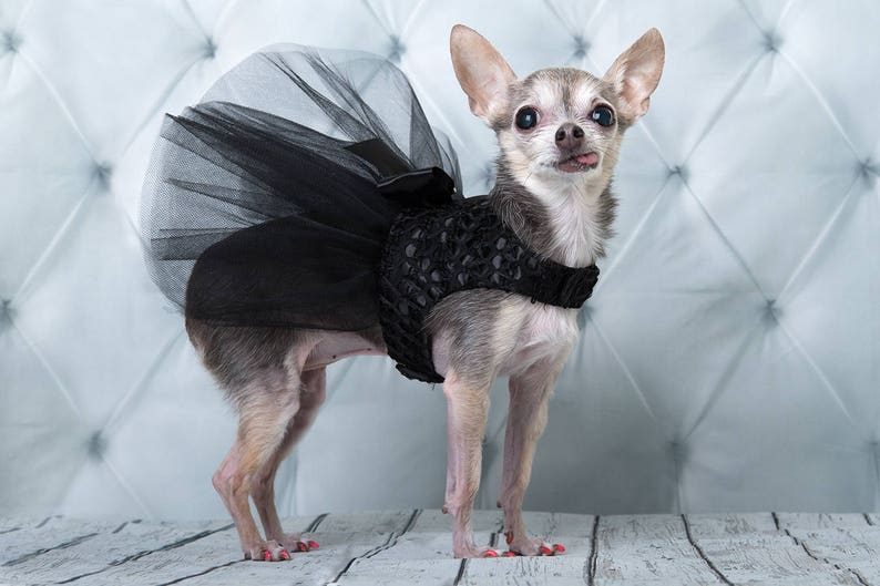 Black satin lace and tulle dress for dog XXXS XXS XS S M image 0