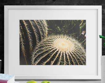 Cactus Art-Cactus Poster-Digital Download-Cactus Printable-Cactus Printable Art-Cactus Digital Print-Cacti Tropical Print-Photo Print Cactus