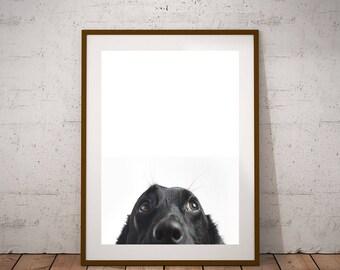 Golden Retriever Print, Dog Wall Art, Black and White Photo, Large Printable Poster, Digital Download, Modern Minimalist Dog-Funny Dog-Print