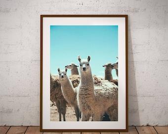 Llama Print - Llama Wall Art, Digital Download, Llama Face Printable, Alpaca Print, Mexico Print, Animal Printable, Quirky Print, Peekaboo