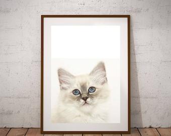 Animal Wall Art, Peekaboo Print, Digital Print , Cat Face Photo, Black And White Cat, Cat Eyes Print, Cat lover gift, Nursery Decor, Boho