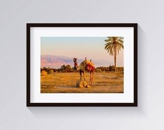 Camel Print-Desert Animal Wall Art-Digital Print-Arabic print-Beige Print-Camel Poster-Desert Print-African Animal Print-Mediterranean Print