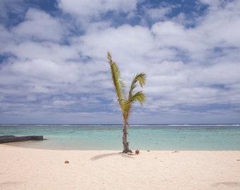 Coconut Tree, Beach Print, Ocean Art, Ocean Photography, Ocean Decor, Office Art, Beach Photo, Wall Art