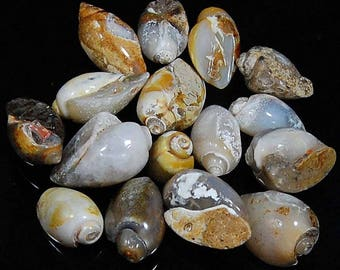 420 CTS aaa 100% natural Vintage FOSSIL SHELL wholesale lot piece 16 loose gemstone cabochon size=15 to 29 mm (approx)
