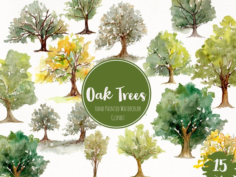 Watercolor Hand Painted Oak Trees Clipart Nature Forest Art Watercolor Evergreen Art Woodland Fall Oak Tree Clipart Trees Clip Art