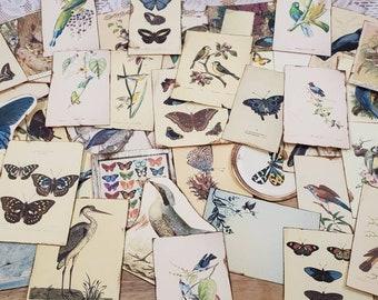 Blue Skies Ephemera Pack (Birds & Butterflies) 45 images