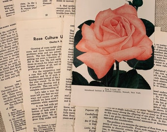 Vintage 1950s Rose Book Pages Set of 10